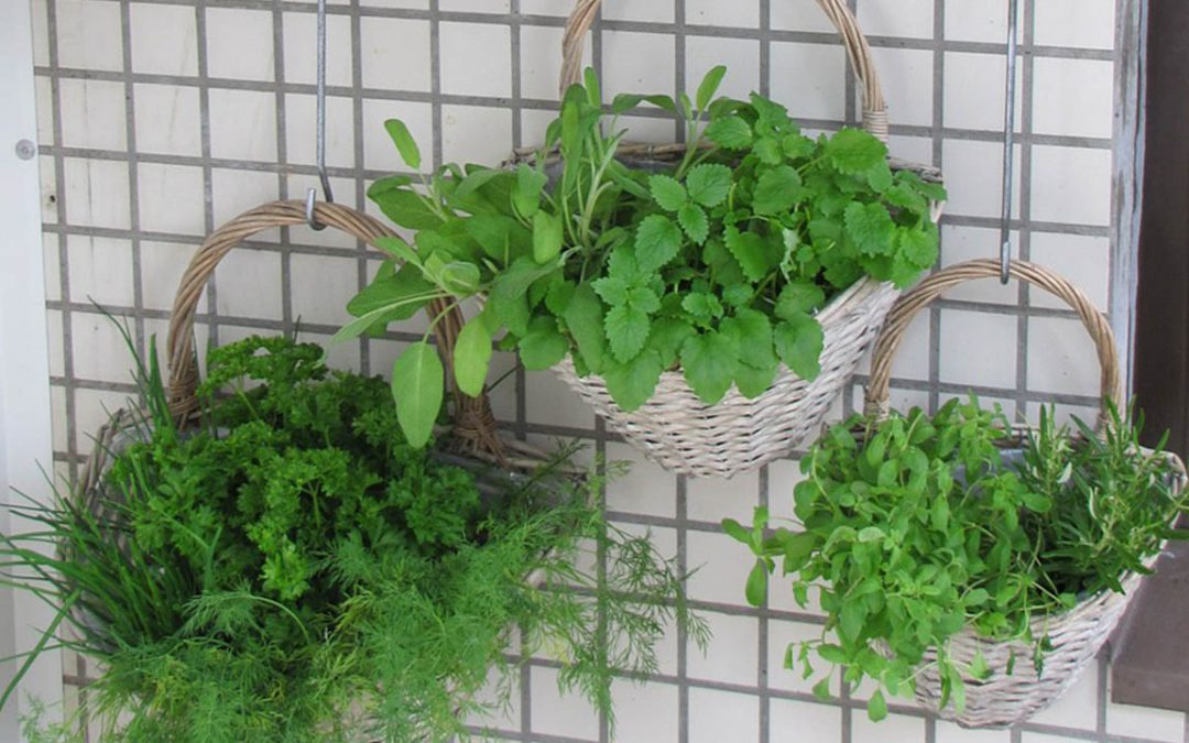 Vertical Gardening 101: The What, Why, and How of Small Space Gardening